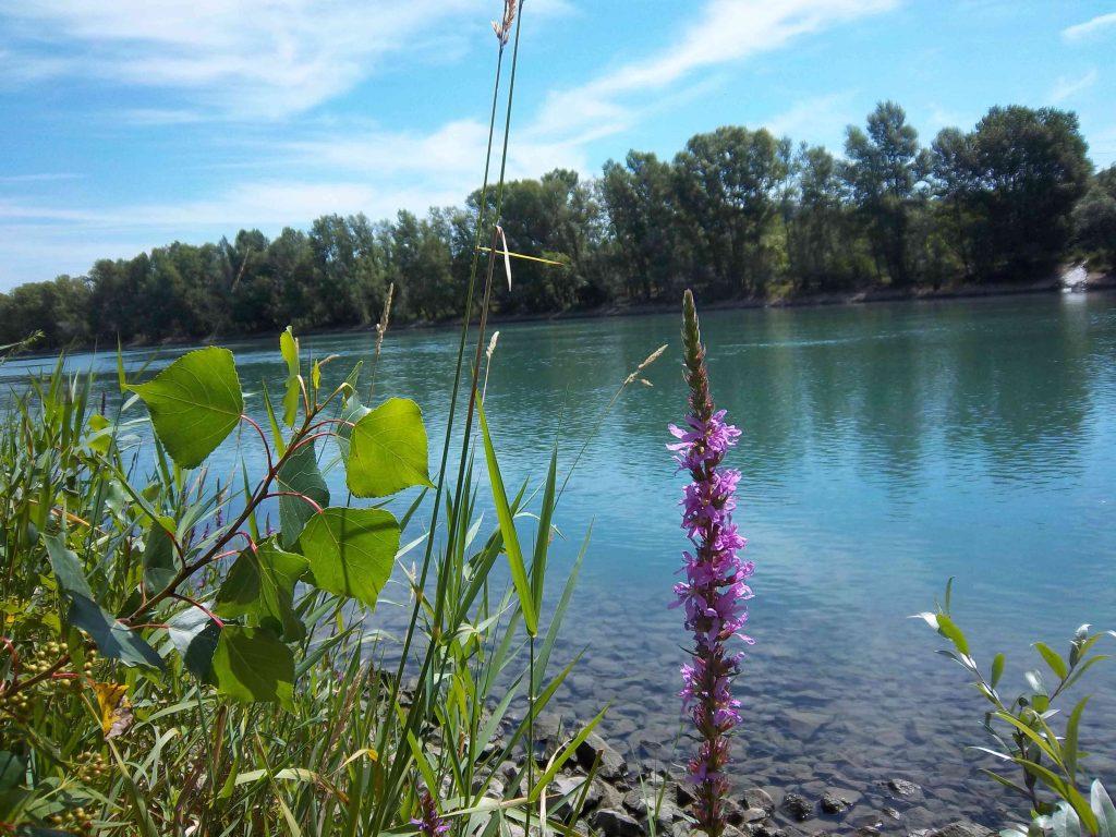 Rhône et fleurs au sud de Lyon Par Patrick Huet
